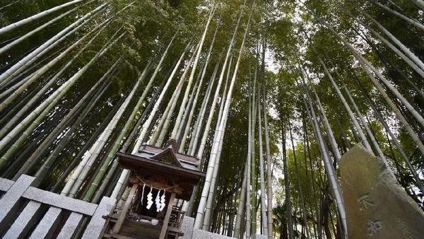 Seperti di Indonesia, Jepang juga punya hutan yang disakralkan. Berlokasi di pinggir Tokyo, konon siapa yang memasukinya bisa hilang (istimewa)