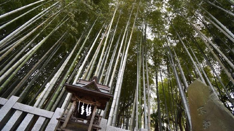 Hutan terlarang di Jepang.