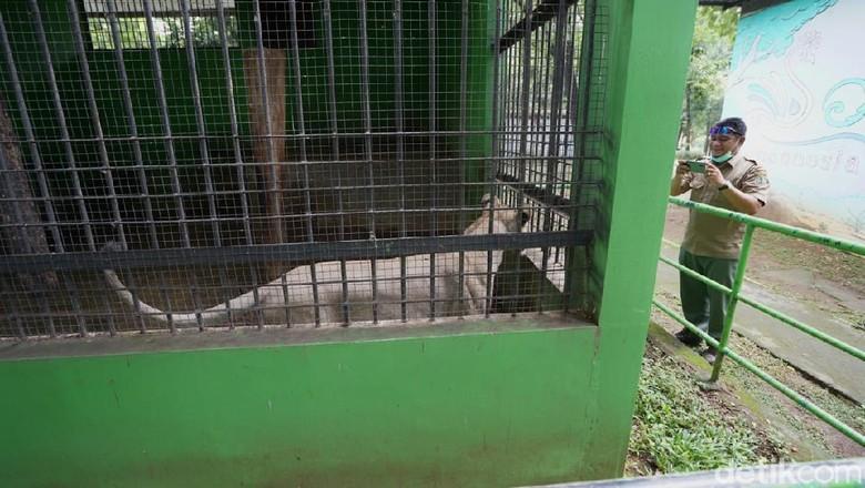 BKSA Jateng meninjau kelayakan kandang di Taman Jurug, Rabu (9/2/2021).