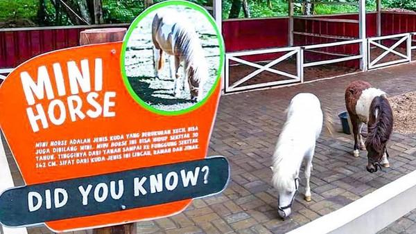 Puas berfoto, destinasi menarik selanjutnya adalah Cimory Forest Walk. Masih berada di kawasan Cimory Riverside, di sini traveler akan bertemu hewan menggemaskan di mini zoo. (Cimory Puncak/instagram)