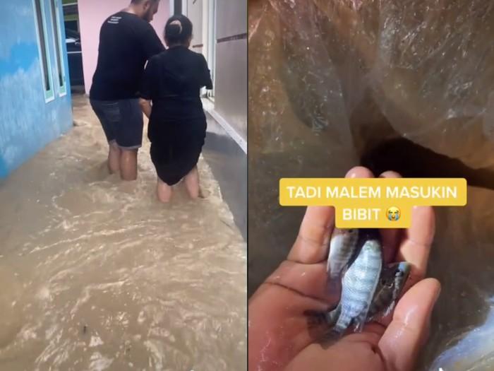 Nyesek! Ribuan Ikan Nila Siap Panen Hanyut Terbawa Banjir
