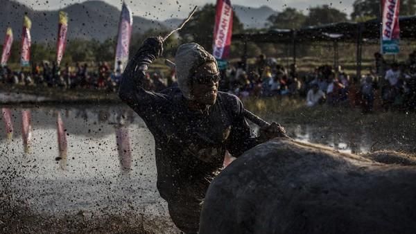 Barapan Kebo dilakukan untuk merayakan dan memberikan hiburan menjelang musim tanam tahunan.