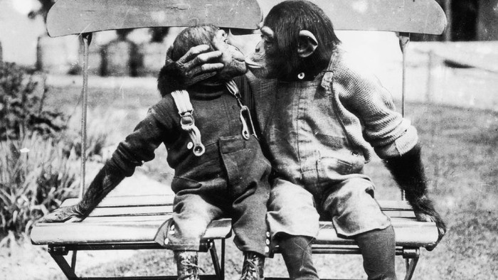 Ada berbagai cara yang dilakukan sejumlah hewan untuk menunjukkan kasih sayang, tak hanya untuk sesamanya tetapi juga kepada manusia. Seperti apa potretnya?