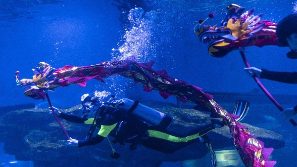 Ocean Park menyelenggarakan penampilan tari naga oleh para penyelam menjelang perayaan Tahun Baru Imlek.