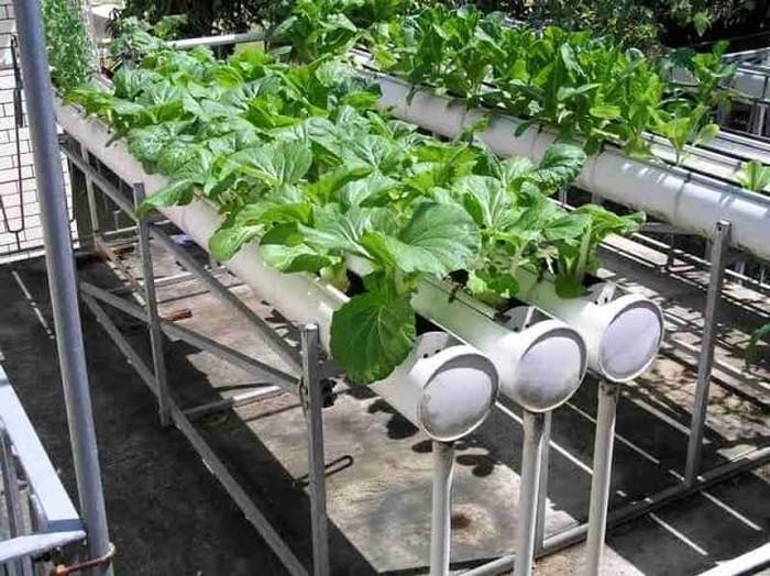 Direktur Jenderal Hortikultura Prihasto Setyanto melihat urban farming setahun belakangan ini sebagai fenomena yang luar biasa.