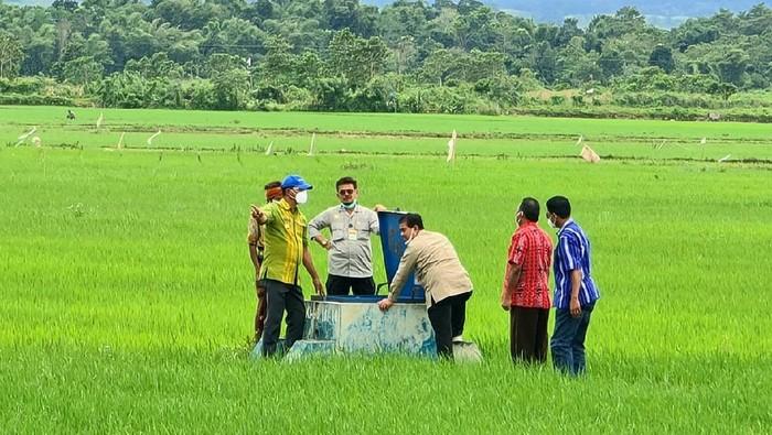 Food Estate Sumba Tengah