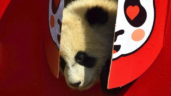 Keranjang bambu yang berisi makanan disiapkan untuk panda, dengan karakter China fu, yang berarti keberuntungan dan berkah.