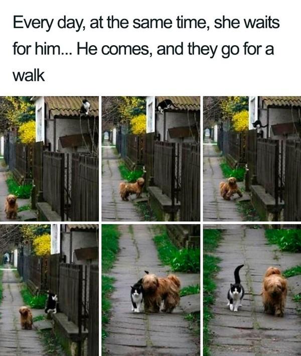 Kata tuannya, anjing ini setiap hari datang ke rumahnya, menggongong, dan mengajak kucing jalan-jalan.