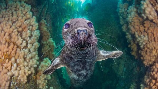 Kirsty Andrews berada di urutan ketiga dalam kategori British Waters Wide Angle dengan karya berjudulgrey seal gully.