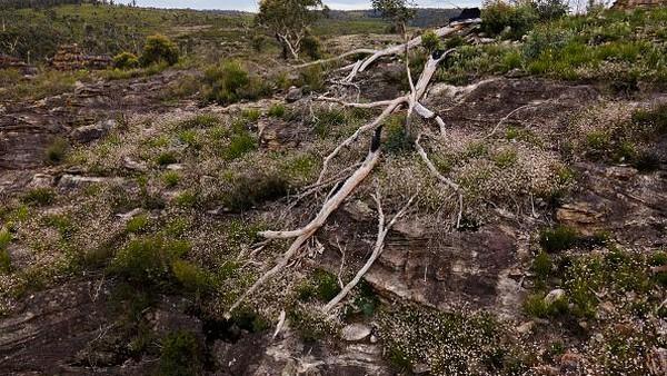 Sekitar 80 persen area warisan dunia rusak akibat kebakaran hutan dan lahan yang terjadi di Negeri Kangguru beberapa waktu lalu tersebut.