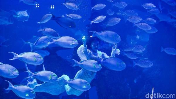 Atraksi Liong Show (pertunjukan naga) bawah air dan putri duyung tersebut digelar dalam rangka memeriahkan perayaan Tahun Baru Imlek.