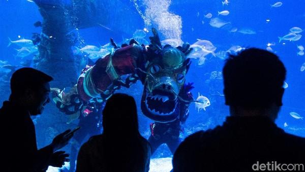 Lalu dilanjutkan dengan Liong Show yang diikuti oleh duyung yang berkeliling aquarium untuk menyapa pengunjung.