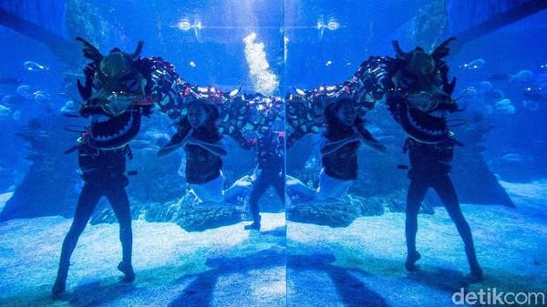 Jakarta Aquarium & Safari menggelar pertunjukan liong dan putri duyung bawah air, Jumat (12/2/2021).
