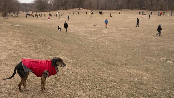 Prospect Park merupakan salah satu taman bermain populer untuk anjing di New York.