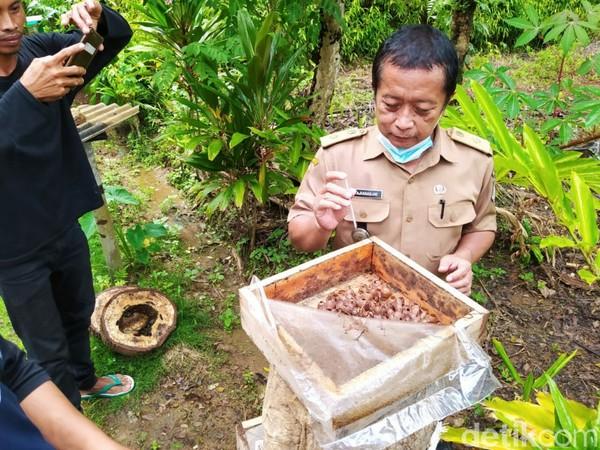 Tercetusnya wisata sedot madu ini karena sebelumnya pengunjung hanya melihat-lihat sarang lebah, berfoto dan membeli madu. Kemudian berpikir ada sebuah wahana yang membuat pengunjung pun lebih tertarik lagi.
