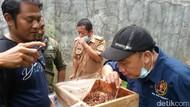 Harus Coba Nih, Wisata Sedot Madu dari Sarangnya Langsung di Ciamis
