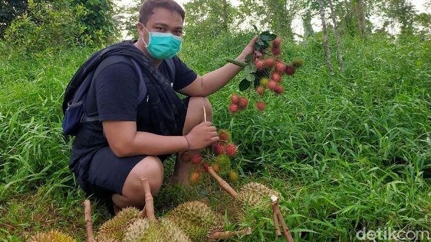 Buah Durian Bulukumba