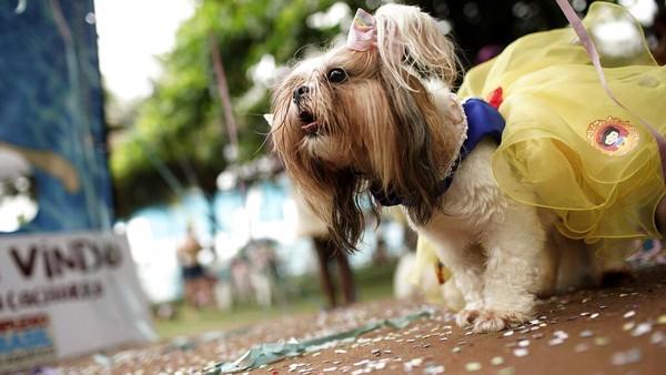 Seekor anjing bernama Cleo tampil dengan kostum Putri Salju di karnaval tersebut. Penampilannya makin menggemaskan dengan hiasan pita di kepalanya.