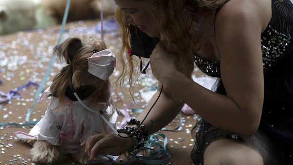 Guna mengantisipasi penyebaran virus Corona, ada juga warga yang memasangkan masker di hewan peliharaan mereka saat ikut serta meramaikan karnaval tersebut.