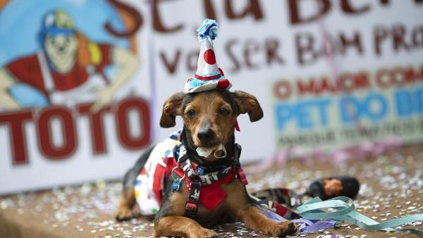 Karnaval itu pun jadi salah satu kegiatan yang paling dinanti oleh para pencinta hewan peliharaan.