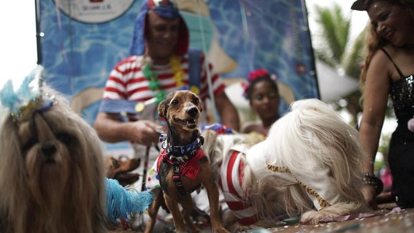 Sejumlah anjing tampak berdandan dengan menggunakan kostum unik nan menarik saat ikut serta dalam karnaval anjing di Brasil, Sabtu (13/2/2021).