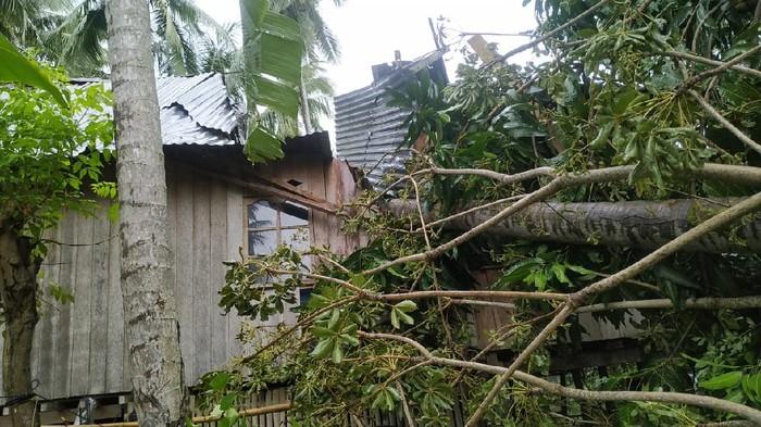 Rumah Warga di Polman Rusak Tertimpa Pohon Tumbang, Tak Ada Korban
