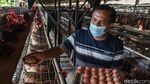 Ini Sukarman, Pensiunan Guru yang Sukses Jadi Peternak Ayam Petelur