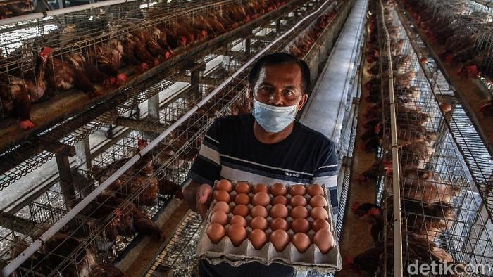 Seorang pensiunan guru asal Blitar, Jawa Timur, bernama Sukarman sukses menjadi peternak ayam petelur. Ini kisahnya dalam bingkai foto.