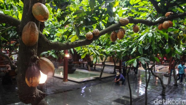 Kampung Coklat bermula dari 120 pohon kakao di area lahan 750 m2 pada tahun 2000. Jumlahnya terus berkembang hingga saat ini mampu memproduksi biji kakao ratusan ton per bulan.