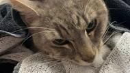 Meneladani Cara Kucing Mengisolasi Diri