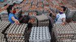 Intip Pengemasan Telur di Blitar Tidak Pernah Sepi Meski Pandemi