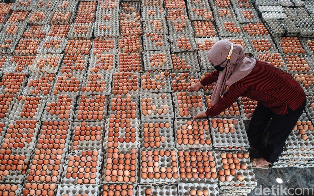 Para pekerja menyortir telur sesuai kualitas sebelum dikemas dalam wadah di gudang Koperasi Peternak Unggas Sejahtera, di Kecamatan Ponggok, Blitar (2/2/2021). Telur dipisah menjadi 3 kategori utama yakni kulit telur dengan coklat, krem dan putih.