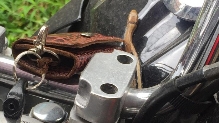 Ular keluar dari tangki motor