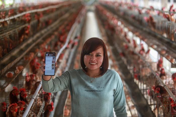 peternak ayam