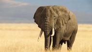 Gajah-gajah Pun Ikut Demo Anti-kudeta Militer di Myanmar