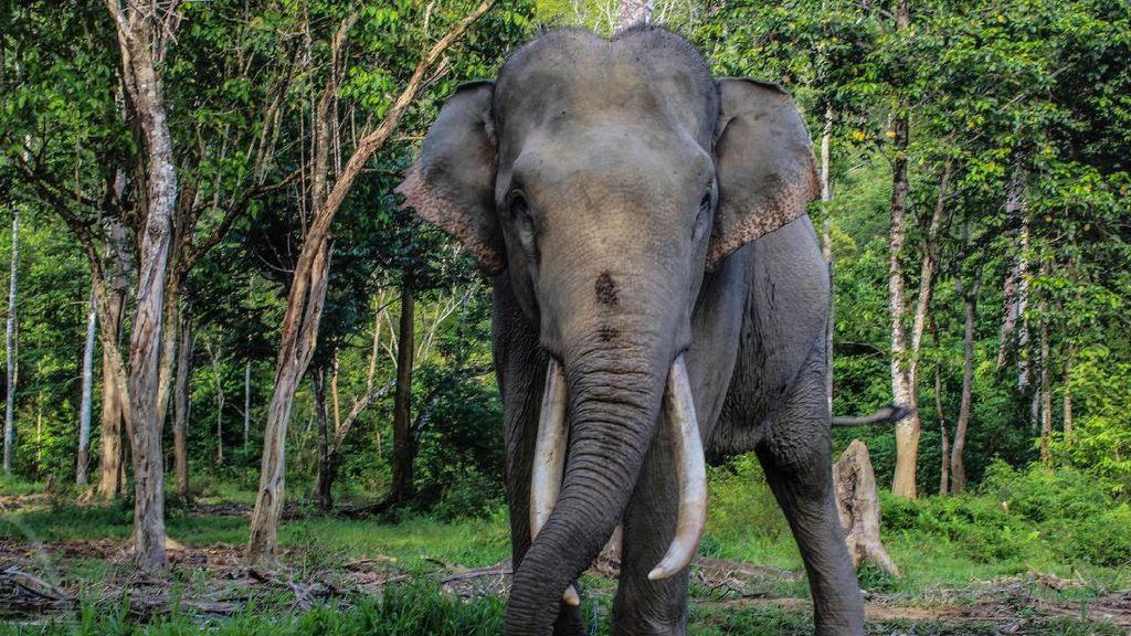 Disparbud Bali Usut Selebgram Rusia Pose Telanjang di Punggung Gajah