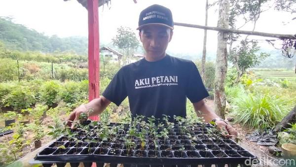 Deden Purbaya (29) pemilik sekaligus pengelola Kebun Anggur Brazil di Majalengka sudah membudidaya jenis ini sejak 2019. Baru di tahun 2020, dia berani menawarkan tiga paket wisata: ada paket edukasi, paket wisata dan paket liwet.