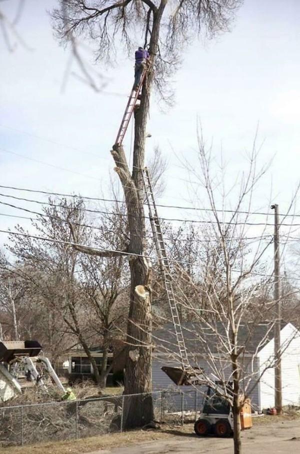 Petugas yang memotong pohon dengan bantuan tangga, sekedarnya!