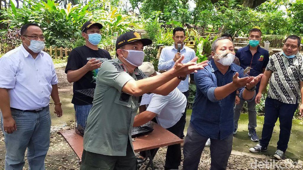 Lepas Burung Pemakan Ulat, Ini Upaya Banyuwangi Beri Kenyamanan Wisatawan