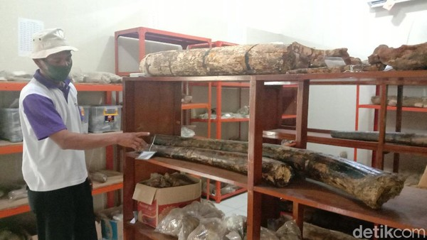 Kata Jamin, ada ribuan fosil hewan purbakala yang disimpan di Museum Purbakala Patiayam. Dia mencatat ada 8.000 fragmen fosil yang disimpan di museum. Jumlah tersebut belum lagi adanya penemuan fosil terbaru oleh warga setempat.