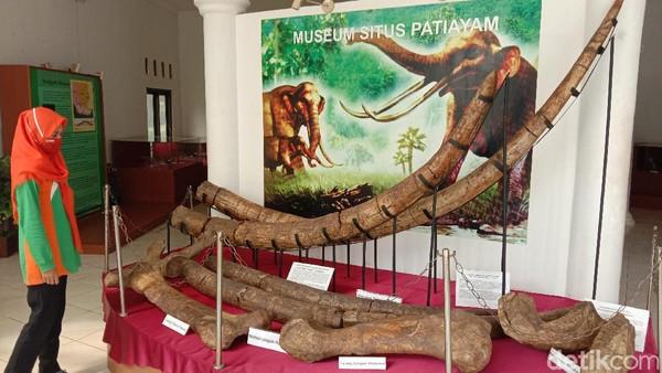 Situs Purbakala Patiayam menyimpan banyak fosil hewan purba. Situs Patiayam mulai dikenal sejak tahun 1857. Pada tahun itu ada seorang penelitian yang menemukan fosil gajah purba.
