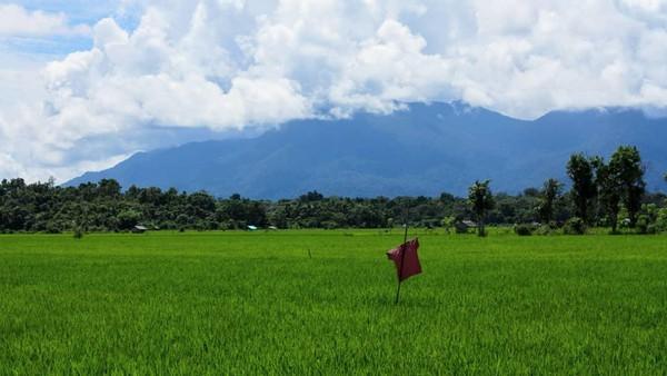 Gunung Palung adalah salah satu taman nasional terbesar di Indonesia. Ada banyak spesies hewan hingga flora langka.(Balai Taman Nasional Gunung Palung)