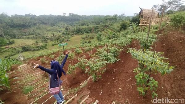 Agro Edu Wisata Garuda Mupuk baru dibuka dan ditata oleh kelompok tani Harapan Laksana 3 Desa Sukamulya sejak akhir 2020 kemarin.