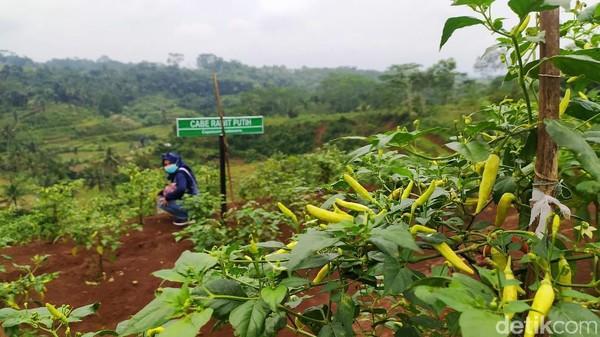 Meski pengerjaan Agro Edu Wisata Garuda Mupuk belum sepenuhnya selesai, tapi sudah menarik para pengunjung.