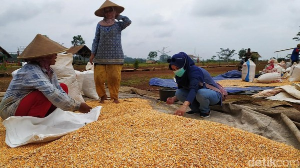 Sehingga Agro Edu Wisata Garuda Mupuk dapat menumbuhkan minat generasi penerus untuk bertani. Mengingat saat ini generasi milenial seperti tidak peduli terhadap pertanian.