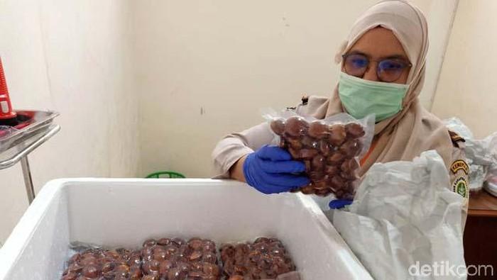 Peluang komoditas pertanian asal Sumbar di pasar luar negeri terus terbuka. Kali ini, giliran Jengkol atau  Archidendron Pauciflorum asal Pariaman yang menembus pasar Jepang.