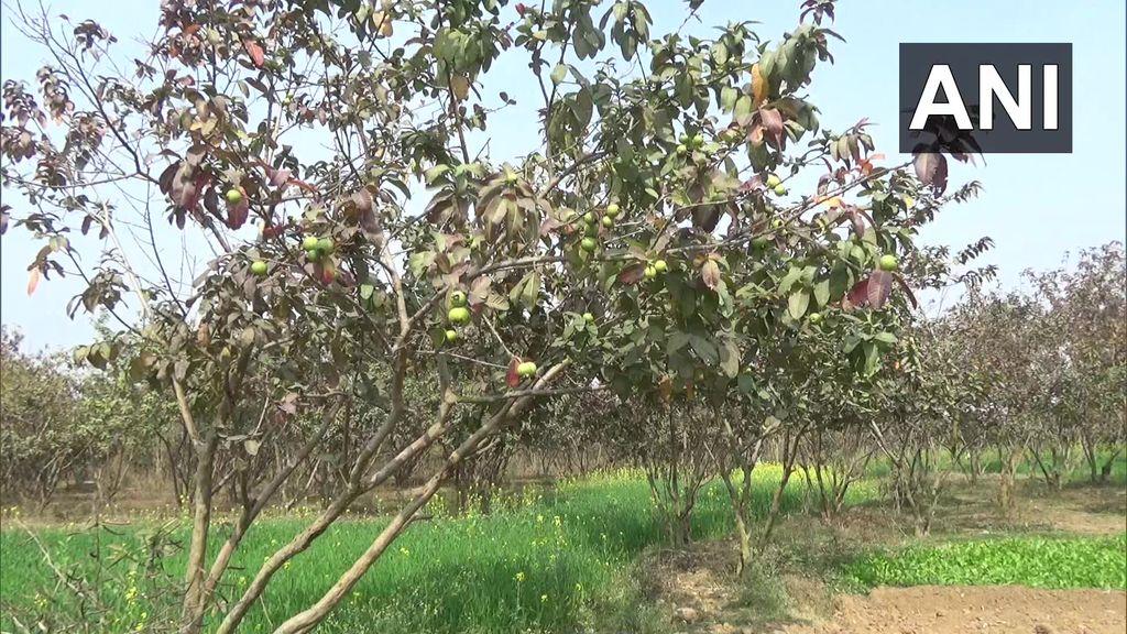 Keren! Pria Ini Sulap Tanah Tandus Jadi Kebun 10 Ribu Pohon Buah