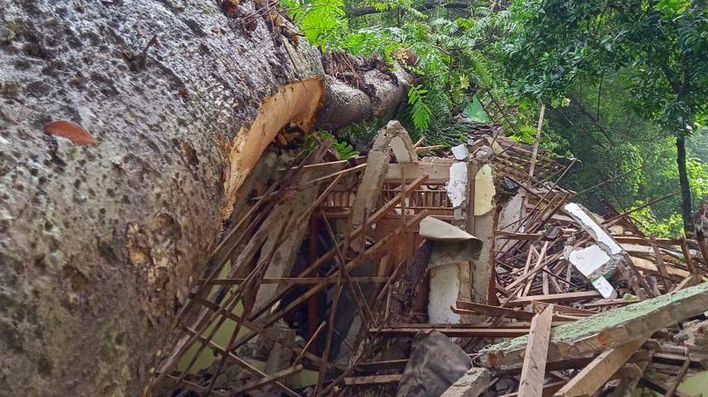 Pohon Winong Keramat Tumbang Timpa Petilasan Ratu Kalinyamat di Jepara