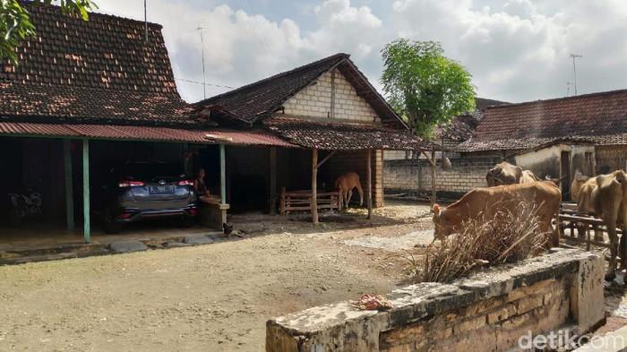 Desa Sumurgeneng, Kecamatan Jenu, Tuban tengah menjadi sorotan dan disebut-sebut sebagai kampung miliarder. Meski begitu, warganya tetap bertani seperti biasa.