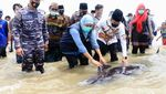 Khofifah Cek Puluhan Paus Terdampar di Pantai Bangkalan
